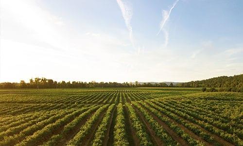 Study-Agrobusiness-Beyond Abroad
